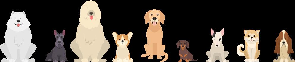 puppilover app results